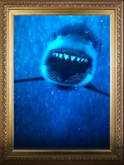 b-back-machine-shark